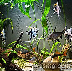 10 Awesome Aquarium Tips