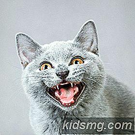 tenn kočička