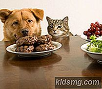 The Scoop on Homemade Pet Food