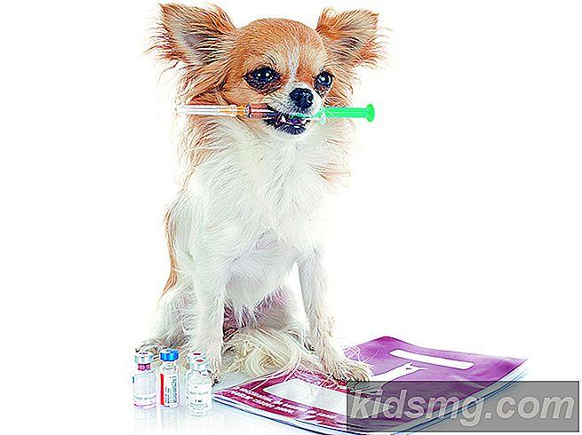 Cosa devi sapere sulle vaccinazioni degli animali domestici